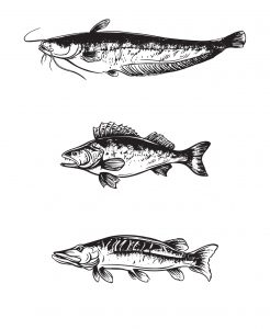 wild-and-free-fish-packaging_08