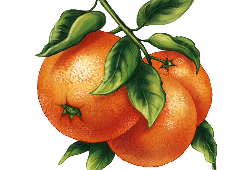 illustration fruit orange intro