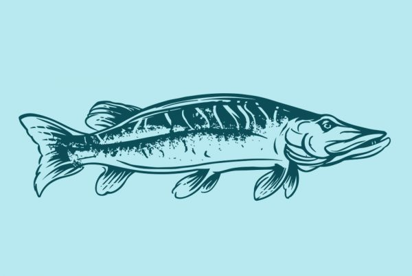 illustration wild&free fish food intro